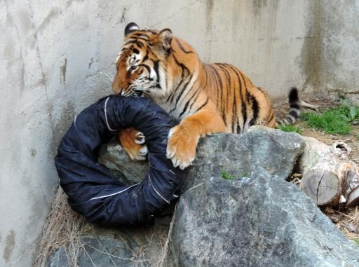 zoo_jeans_branding_japan_1