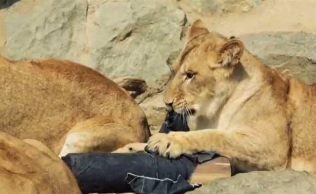 zoo_jeans_branding_japan_2
